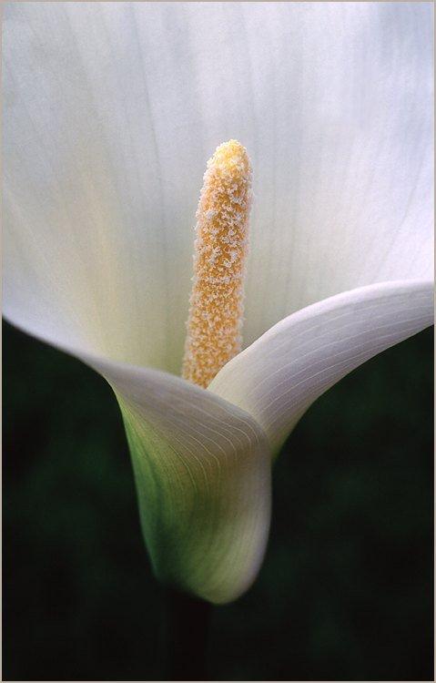fleurarum.jpg