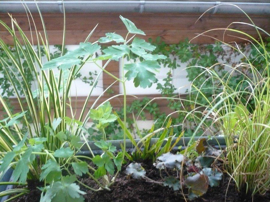 jardinirebalguerie.jpg
