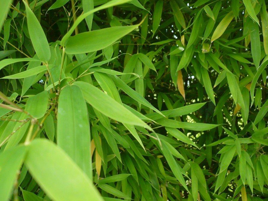 bambousparing.jpg
