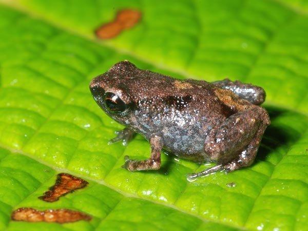 la mini grenouille... dans c'est renversant ! mini-grenouille1