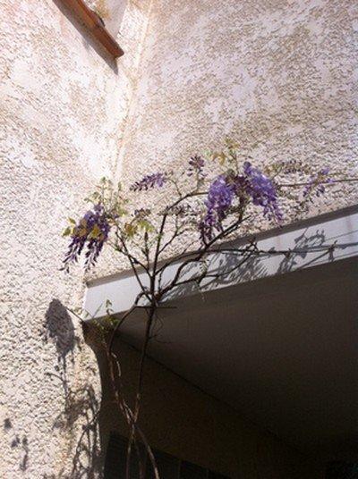 les fleurs du bonheur... dans phototypes photo