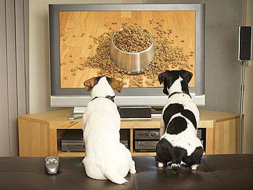 frolic tv pour toutou chic... dans c'est renversant ! dog-tv-440