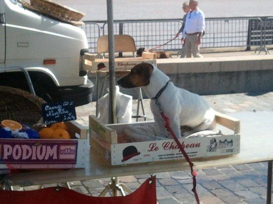 podium pour un chien... dans mon été permanent podium