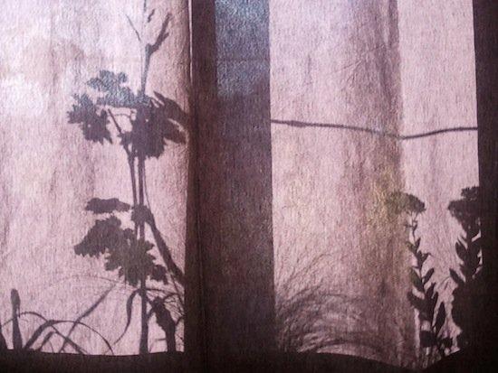 la jardinière chinoise... dans phototypes wp_000154