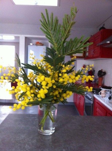 la vie mimosa... dans phototypes v__88002