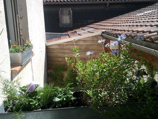 jardinières dream's... dans phototypes wp_000576