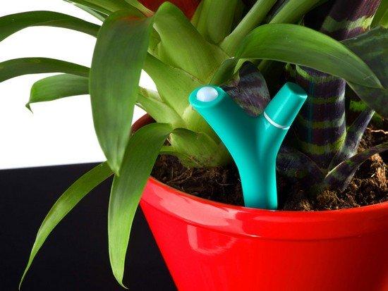 le futur (pouvoir) des plantes... dans christoflash